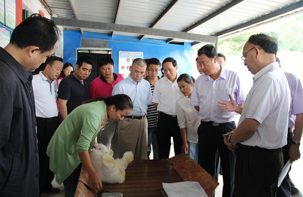 刘远坤副省长到普安县调研指导长毛兔养殖